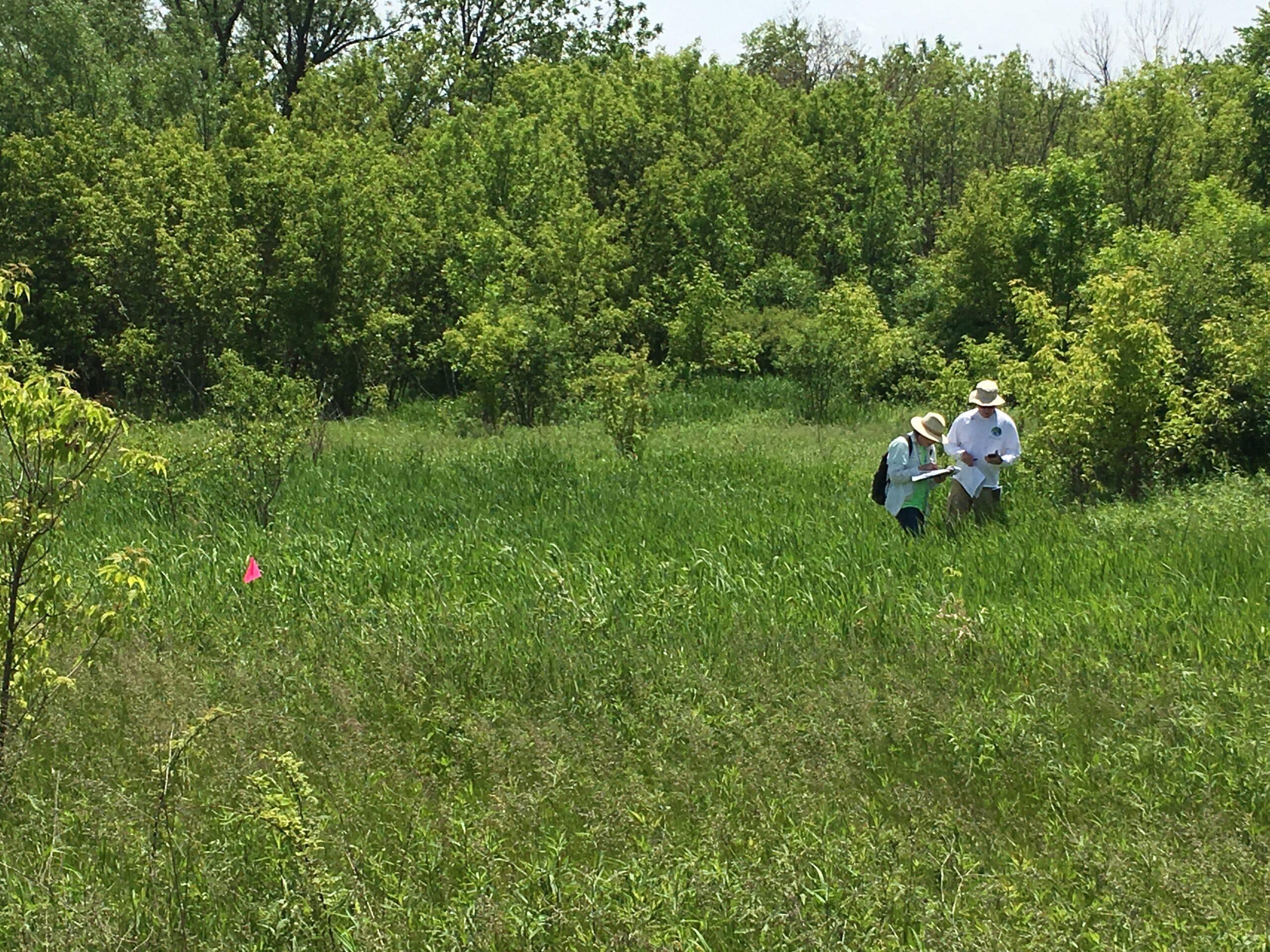 Pike River South Branch Gitzlaff Park Site Survey 2